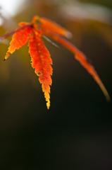 2010年11月_新宿御苑_01