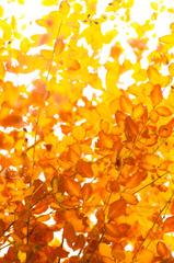 2010年11月_新宿御苑_03