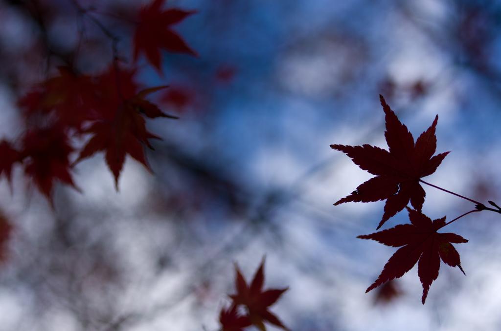 2014年12月21日_新宿御苑