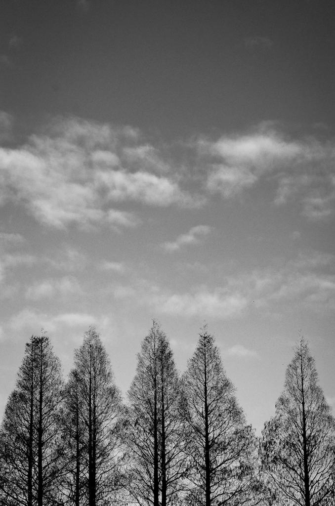 2014年2月9日_新宿御苑