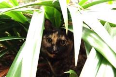 唐沢山神社猫