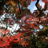 満天の紅葉