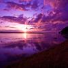 Purple St-Michel