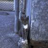 ブルーグレーの野良猫さん。