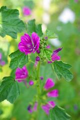 色が素敵な花です。