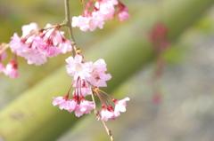 花の醍醐寺