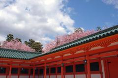 朱塗りの神殿と桜