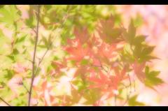 紅に染まった、この葉を…