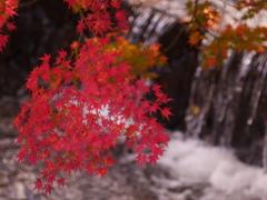 秋色に染まりし