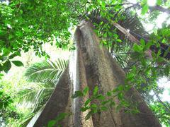 樹齢200年の大木