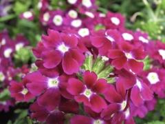 花の主張 5