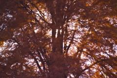 午後の影色