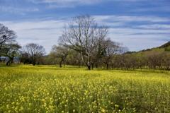 春の大地2