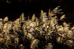 夕刻の光と風と 1