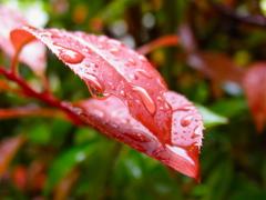雨のオブジェ