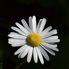 路傍の花3