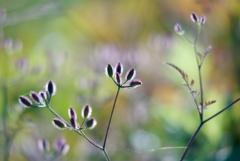 雑草のリズム3