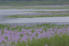 雨の日の池
