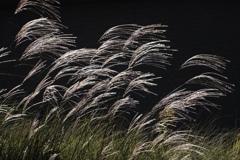 光と風の形