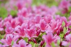 May Pink 4