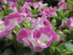 花の声 4