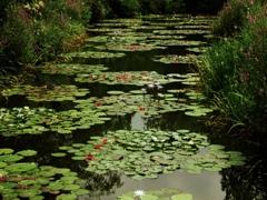 真夏の水の園