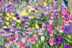 春の印象3