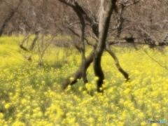 春のリズム 7