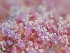 梅雨時のお花畑