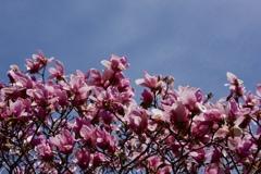 ともかくとにかく春