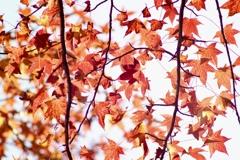 フーの秋1