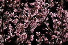春の始まり2