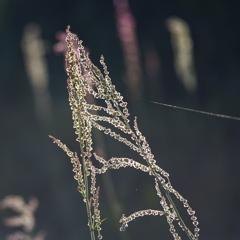 雑草の主張