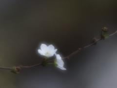 小さな春の予感