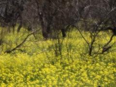 春のリズム 6