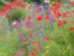 花の季節3