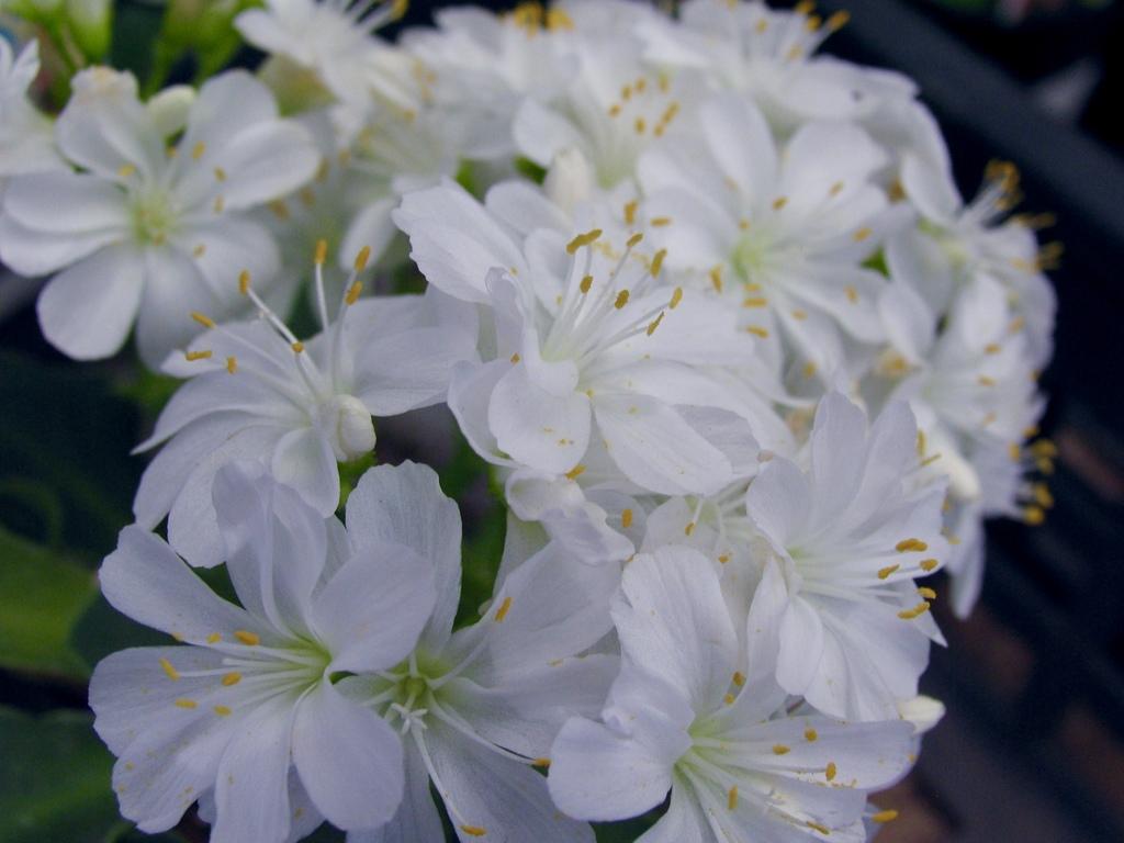 花の主張 1