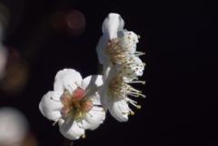 春の光の形