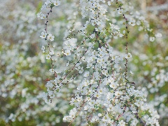 春の白のレイアウト