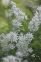 MAY WHITE 3
