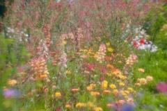 花の季節2