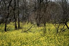春のリズム4