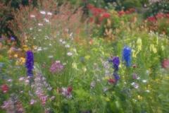 花の季節1