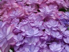 花の主張 2