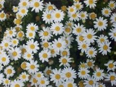四月の花模様