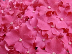 花の主張 3