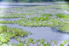 7月の池 2