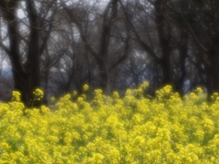 春のリズム5