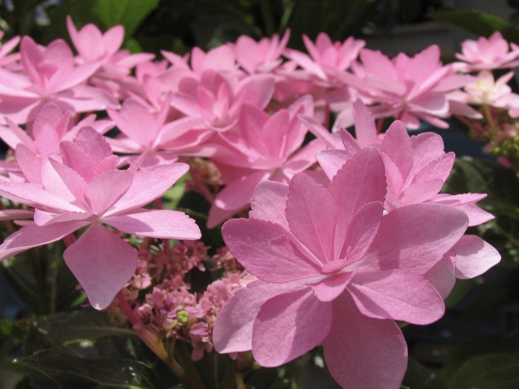 花の声 5
