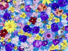 春の集合写真